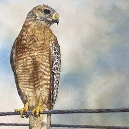 DIANA EAGLES - 'Socially Distant'