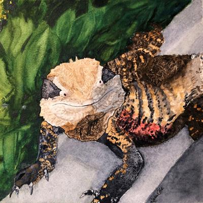 KAREN COLE - 'Bearded Dragon'