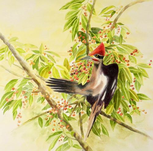 TERESA CHIN - 'Cherries for Breakfast'